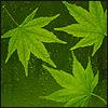 borlandcom userpic