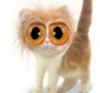 круглые глаза кота