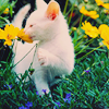 Kitty with a flower