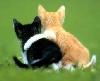 партнерство, друзья, дружба, верность