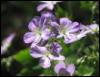 arb flowers