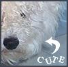 Clyde: charlie by meek