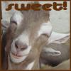 Geoviki: animals - sweet - by viki