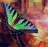 butterfly - Pushing Pixels