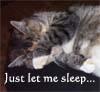 endaewen: cat