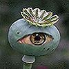 entheogenics userpic