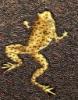 frog-met