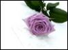1stlite userpic