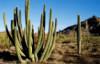 kaktus4you userpic