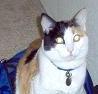 potica_kitty userpic