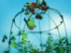 minigarden userpic