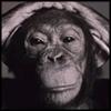 retro_monkey userpic