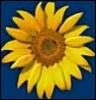 sympto_thermal userpic