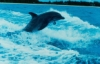 dolphin111: Дельфин