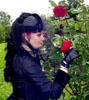 Plucking the Rose
