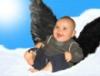 greyashowl