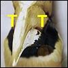 presidentcancer userpic