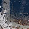 unicornicopia userpic