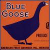 goose looks black.