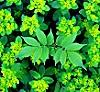 зеленое настроение