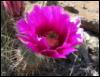 cactus flower, Sedona