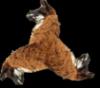 Ralph the Diva Llama