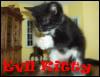 evil-kitty