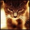 Madjarka: cat