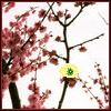 aussiesakura userpic