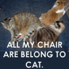 All my chair are belong to cat