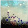 hellomercedes userpic
