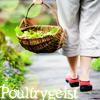 Amanda, Dr. Poultry