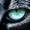 Anonymuncule.: owl's eye