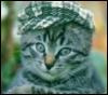 кот в кепке