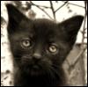 КОТ_НА_КРЫШЕ: Sad Cat