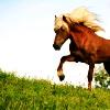 equestrienne userpic