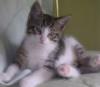 Flopped Kitten