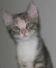 Wonky Kitten