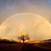 selannia: Nature Full Rainbow