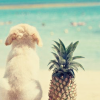 the nightingale in berkeley square: Puppy pineapple