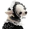 The Lolita Pets Community