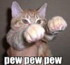 TW Bruhn: Cat lasers