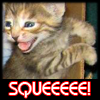 squee kitty