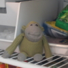 monkey baby in freezer