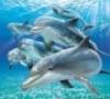 dolphingirl9109