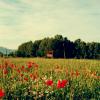 J: fields