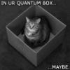 quantum lolcat