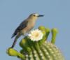 wildbird4 userpic