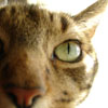 fiddlechick userpic