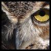 I see hoo